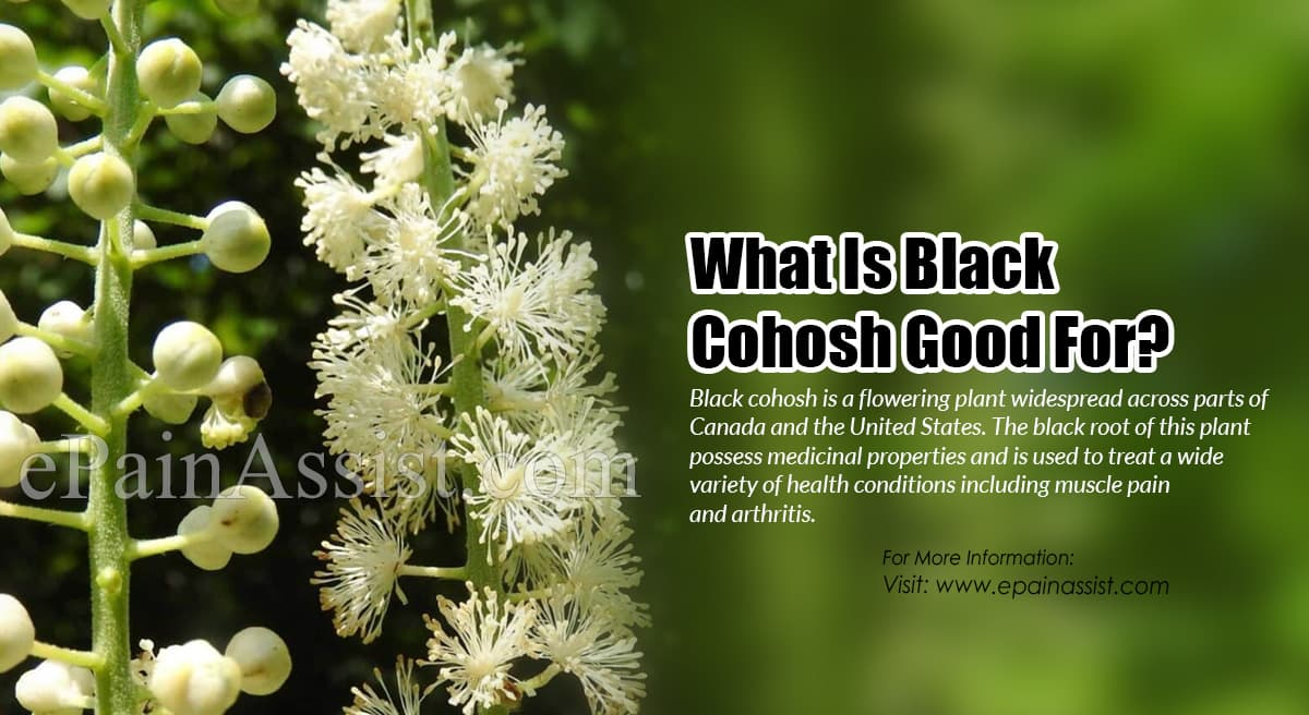 What Is Black Cohosh Good For?