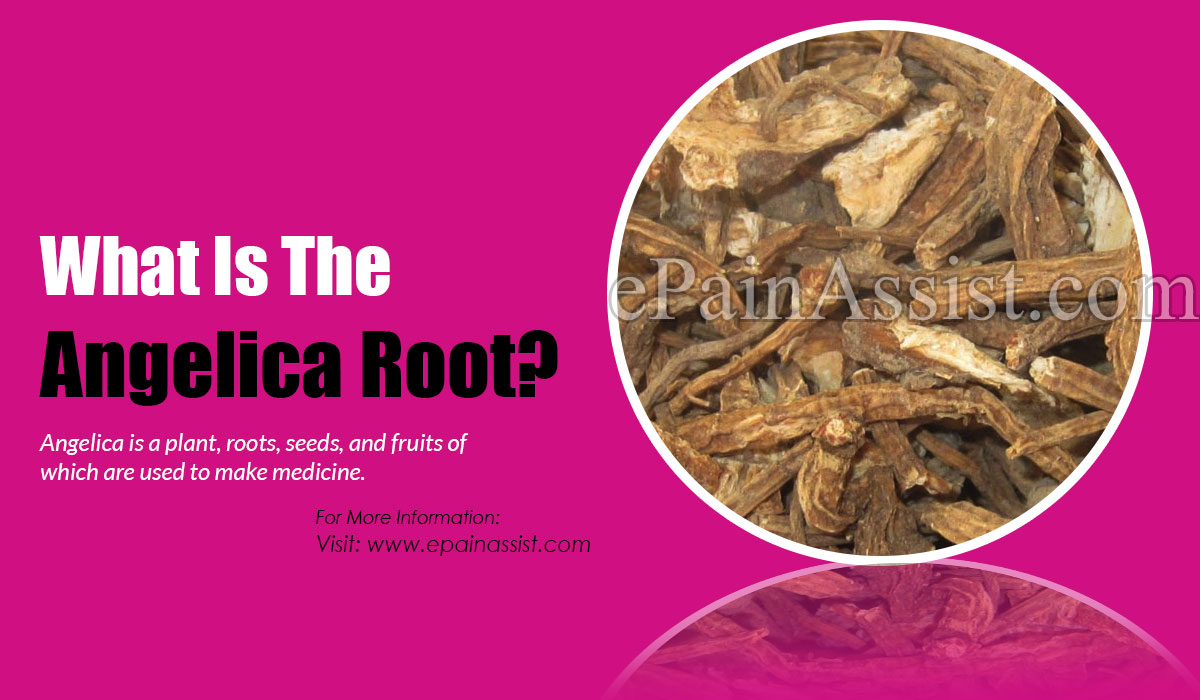 What Is The Angelica Root?c