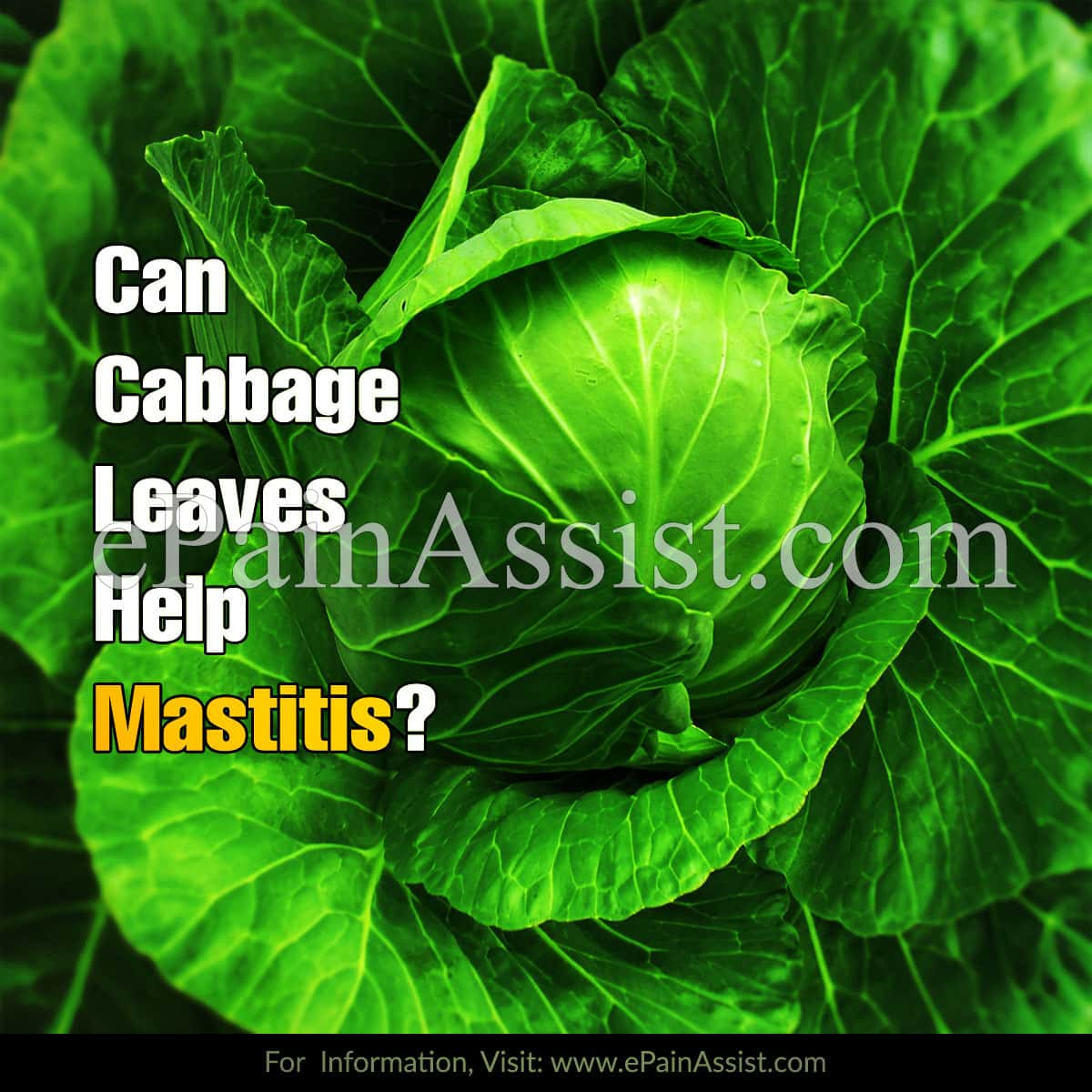 Can Cabbage Leaves Help Mastitis?
