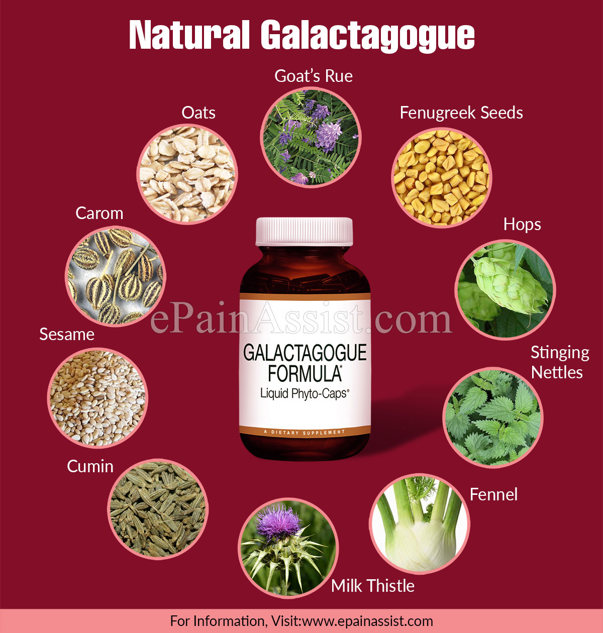 Natural Galactagogues & Their Uses