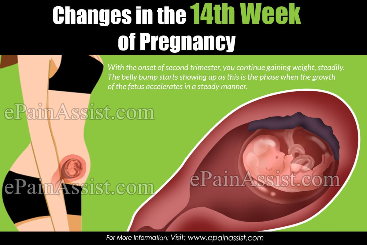 Changes in the 14th Week of Pregnancy