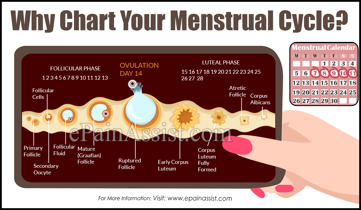 Why Chart Your Menstrual Cycle?