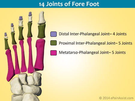 14 Joints of Forefoot