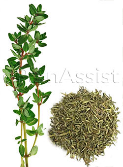 Thyme for Abdominal Pain or Stomach Ache