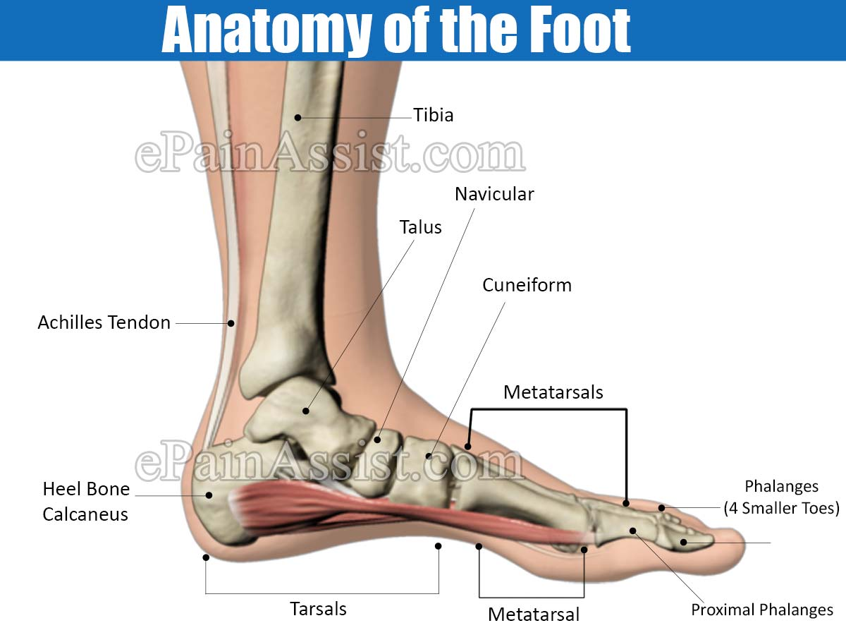 Foot Pain Its Anatomical Distributioncauses Of Foot Pain