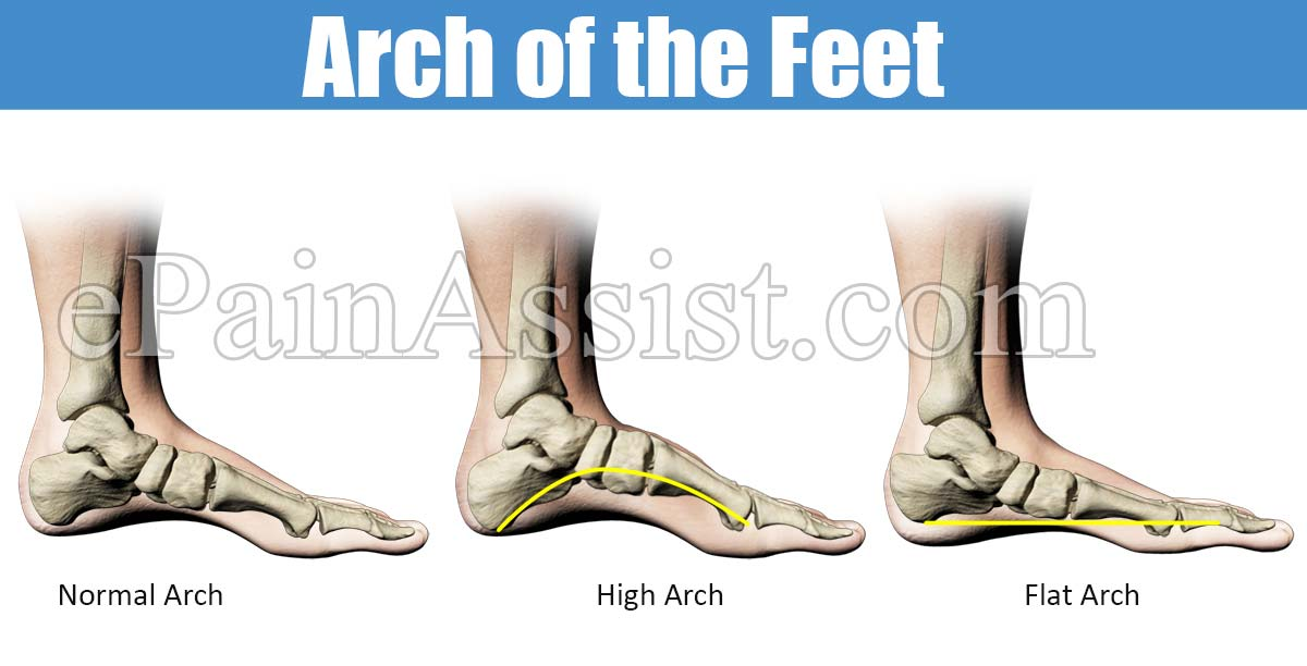 Functions of the Foot