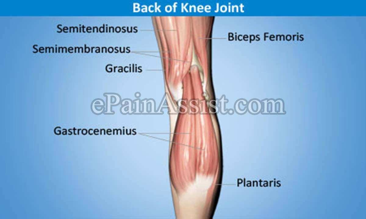 Back of Knee Joint