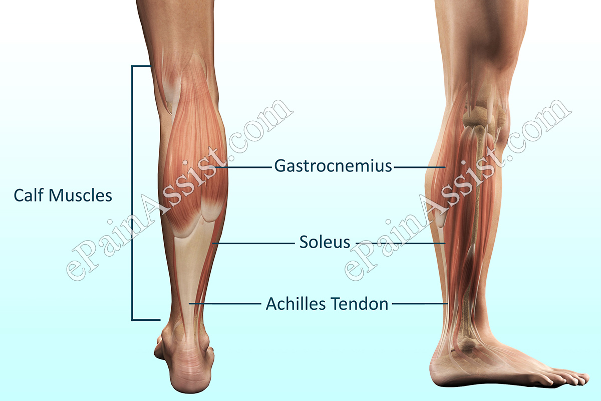 Calf Pain: Treatment, PT, Causes, Diagnosis, Investigations