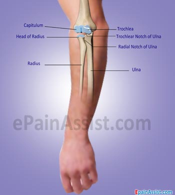Tendon and Muscles of Elbow Joint