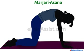 Marjariasana or the Cat Pose for Scoliosis or Spinal Curvature