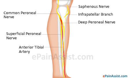 knee joint fracture|classification|types|causes|symptoms|signs, Muscles