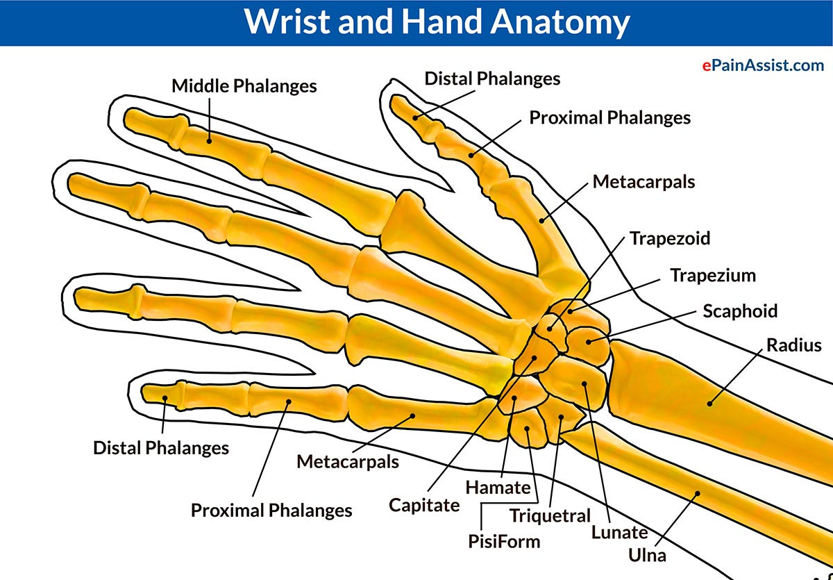 Wrist Joint Dislocation|Causes|Symptoms|Treatment-PT, Close ...