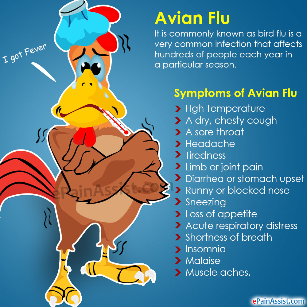 Avian Flu: Causes, Symptoms, Treatment, Prevention - Infographic