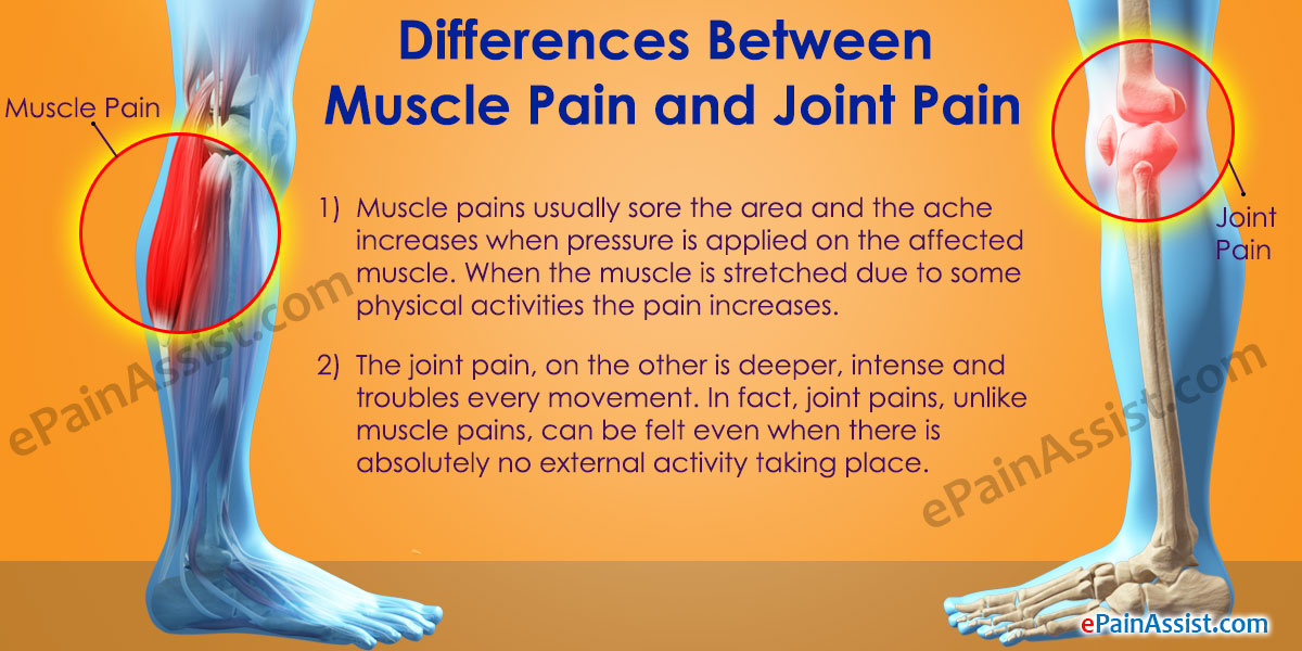 Image result for muscle Pain in knee area