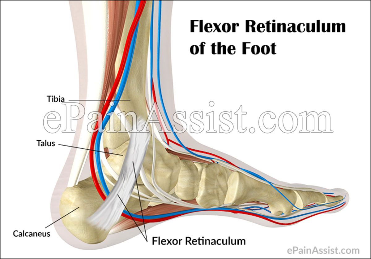 Extensor Retinaculum Foot Pain Strained flexor retinaculum of the foot