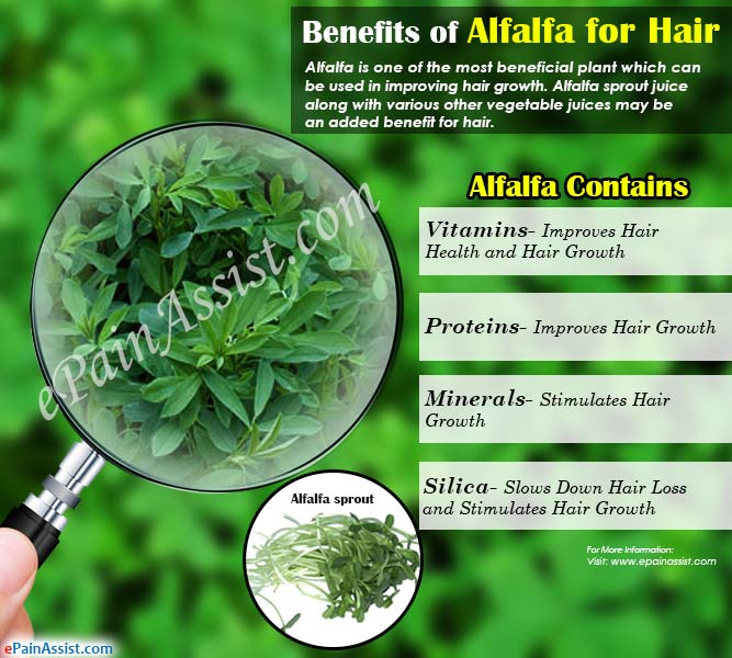 benefits of alfalfa for hair