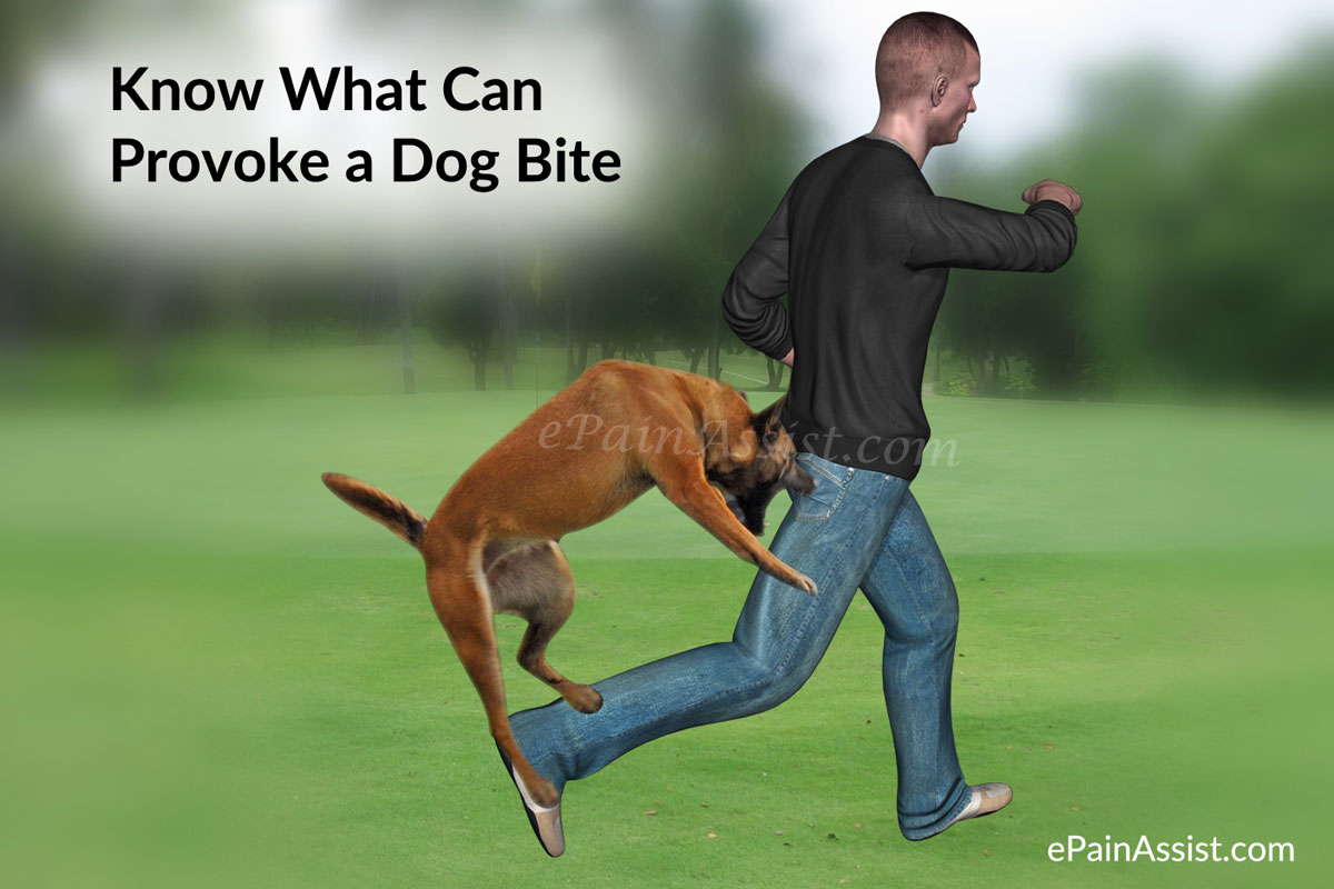 Know What Can Provoke a Dog Bite, Its Treatment, First Aid!