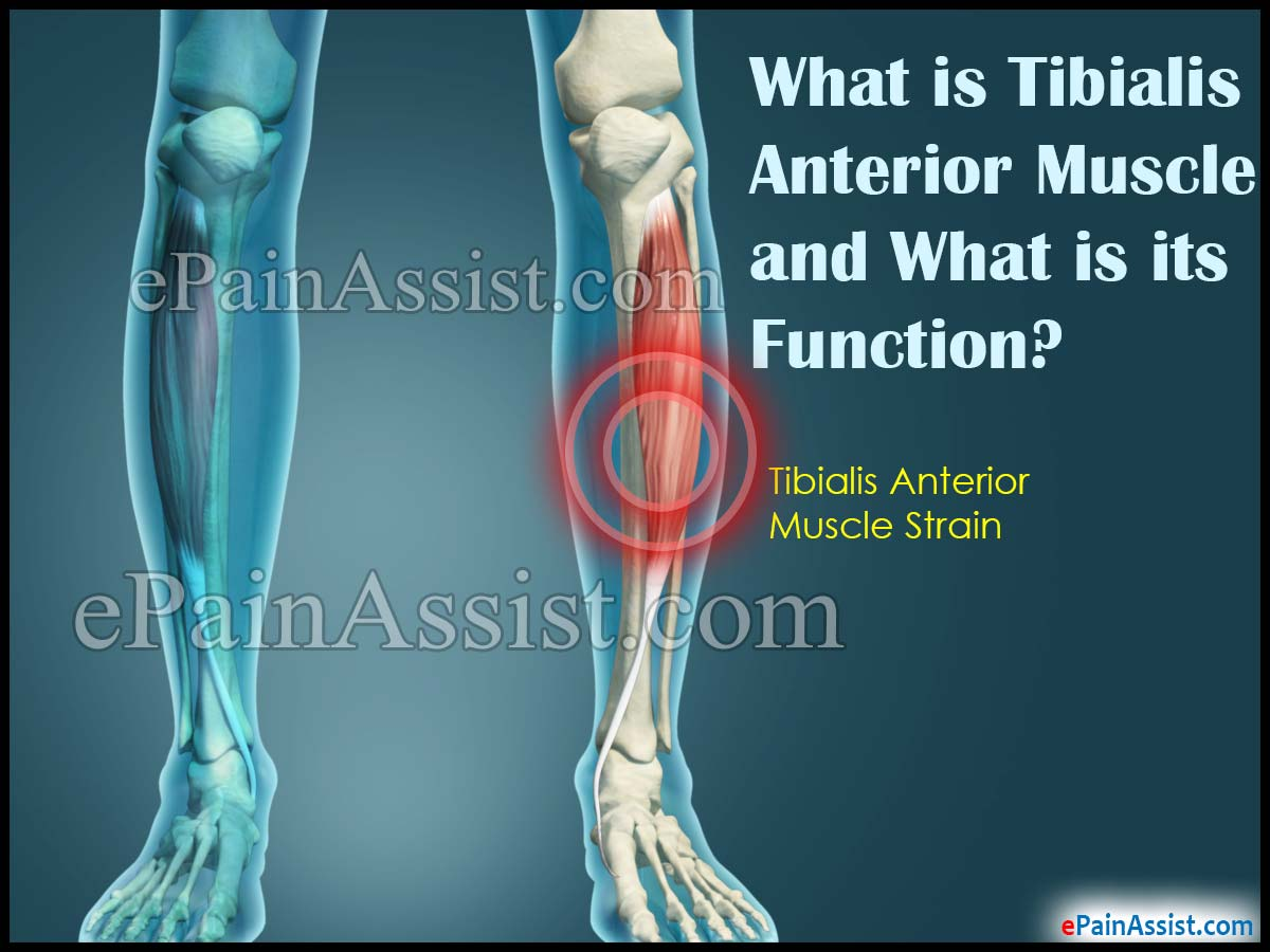 What is Tibialis Anterior Muscle and What is its Function?