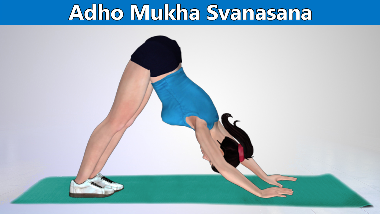 Adho Mukha Svanasana or Downward Facing Dog Pose-An Effective Yoga Pose to Stretch Lumbar and Cervical Spine