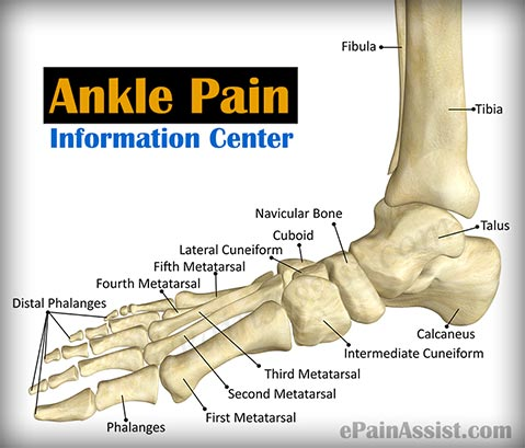 ankle pain information center|ankle joint arthritis|sprain, Skeleton