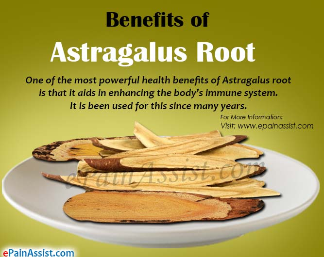Benefits of Astragalus Root
