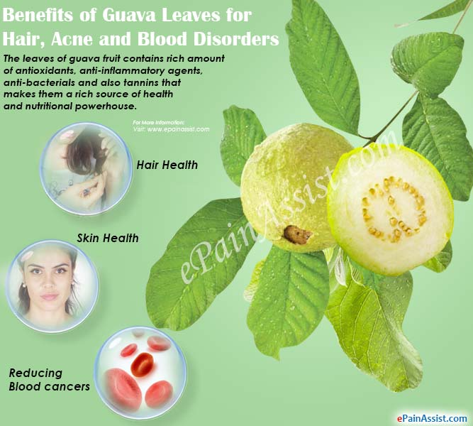 Benefits of Guava Leaves for Hair, Acne and Blood Disorders