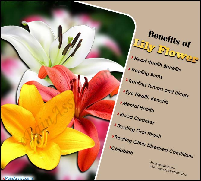 Benefits of Lily Flower