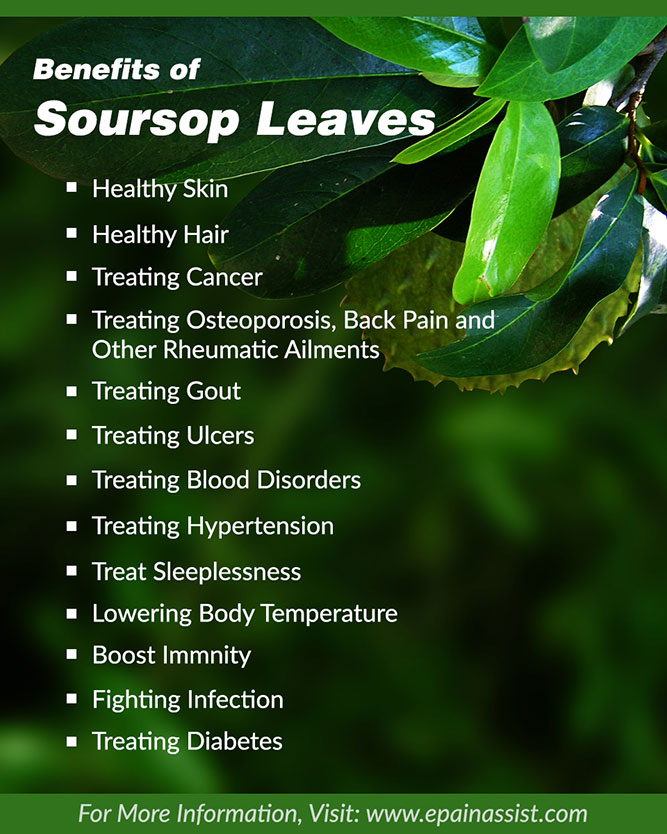 Benefits Of Soursop Leaves Skin Hair Gout Sleep Cancer
