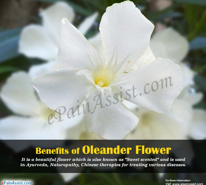 Benefits of Oleander Flower