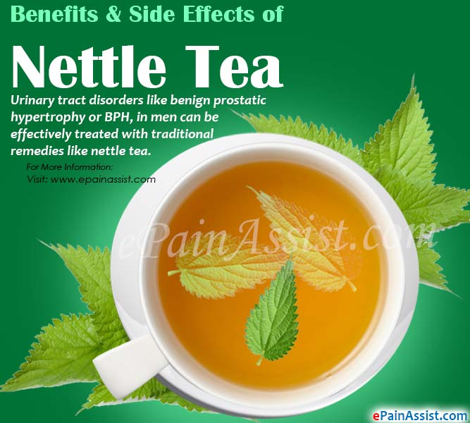 Benefits & Side Effects of Nettle Tea