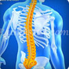 What Is Spinal Shock And How Is It Treated?