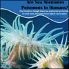Are Sea Anemones Poisonous to Humans|Symptom & Treatment of Sea Anemone Sting