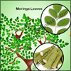 Benefits of Moringa Tree: Health, Skin, Hair, Medicinal