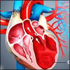 Cardiomyopathy - Causes, Symptoms, Diagnosis, Treatment