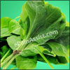 Does Spinach Cause Gas? Nutrition Facts of Spinach & its Health Benefits