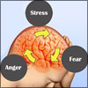 Effects of Stress, Fear, Anger & Love On The Human Brain