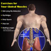 Exercises for Your Gluteal Muscles