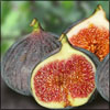 Health Benefits of Fig or Anjeer & its Side Effects