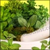 Herbal Medicine or Herbalism: It Uses Medicinal Abilities of Plants; History, Philosophy, Benefits