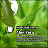 Medicinal Use of Aloe Vera When Applied Externally or Taken Internally