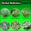 Native American Herbal Remedies or Native American Healing: Study, Examples
