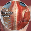 Natural Remedies for Trapezius Muscle Injuries