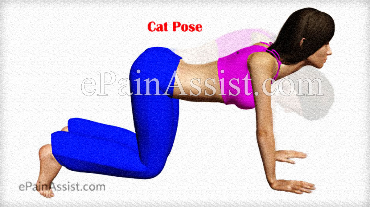 Cat Pose or Marjariasana to Loosen up the Spine and Get Relief from Back Pain