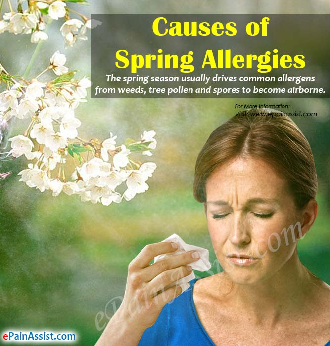 Causes of Spring Allergies