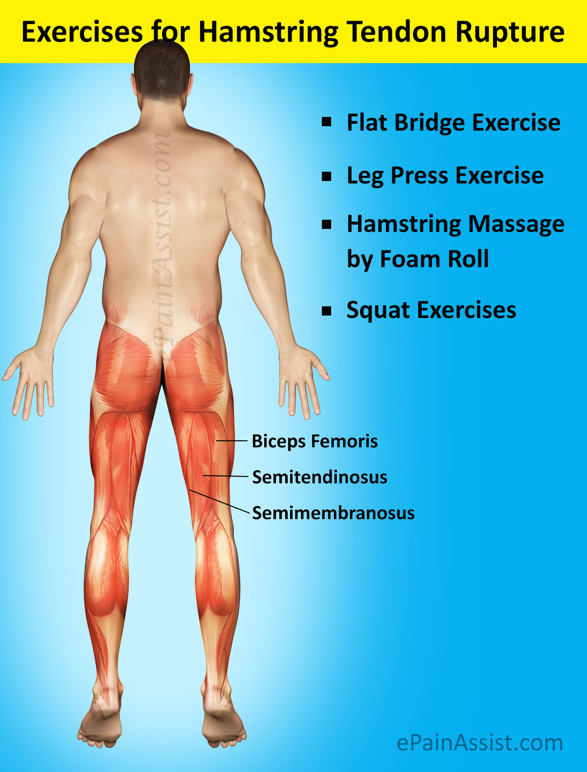 Exercises for Hamstring Tendon Rupture