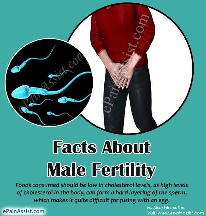 Understanding the Important Facts about Male Fertility and Male Sperms
