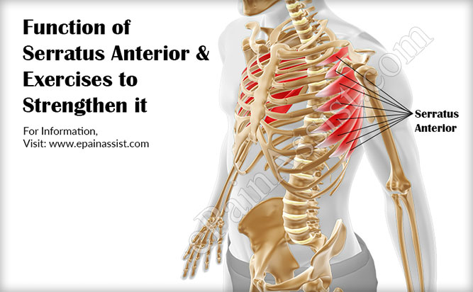 Function of Serratus Anterior & Exercises to Strengthen it