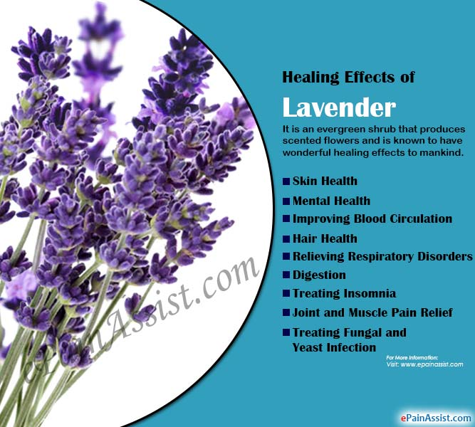 Healing Effects of Lavender