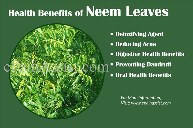 The benefits of neem leaves