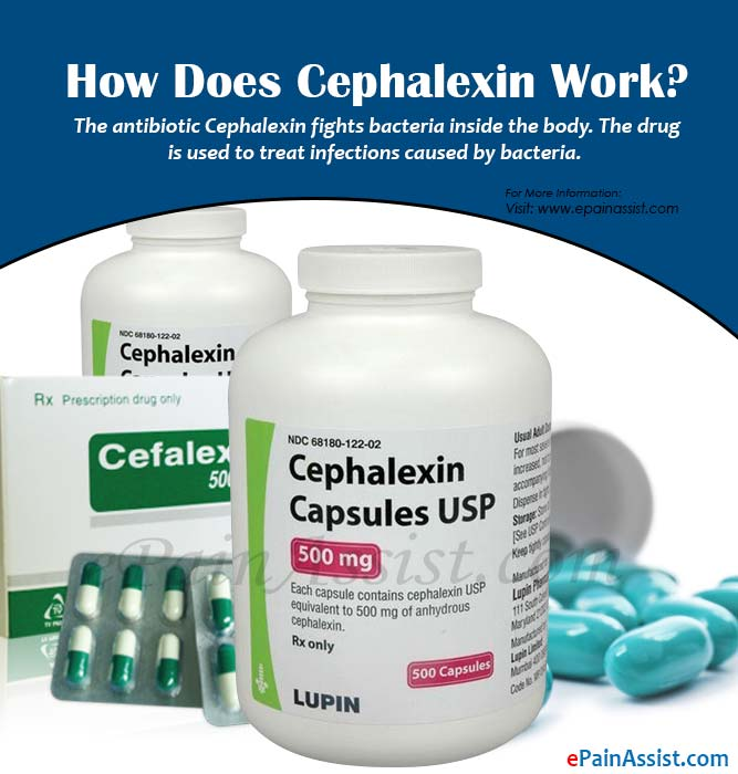 How Does Cephalexin Work?